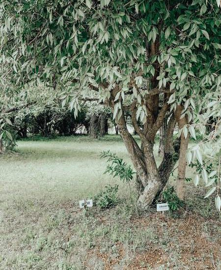 parque natural el aromito federacion