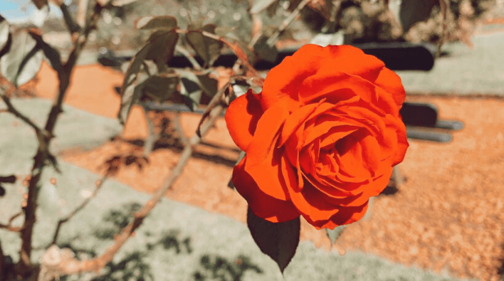 rosedal de palermo