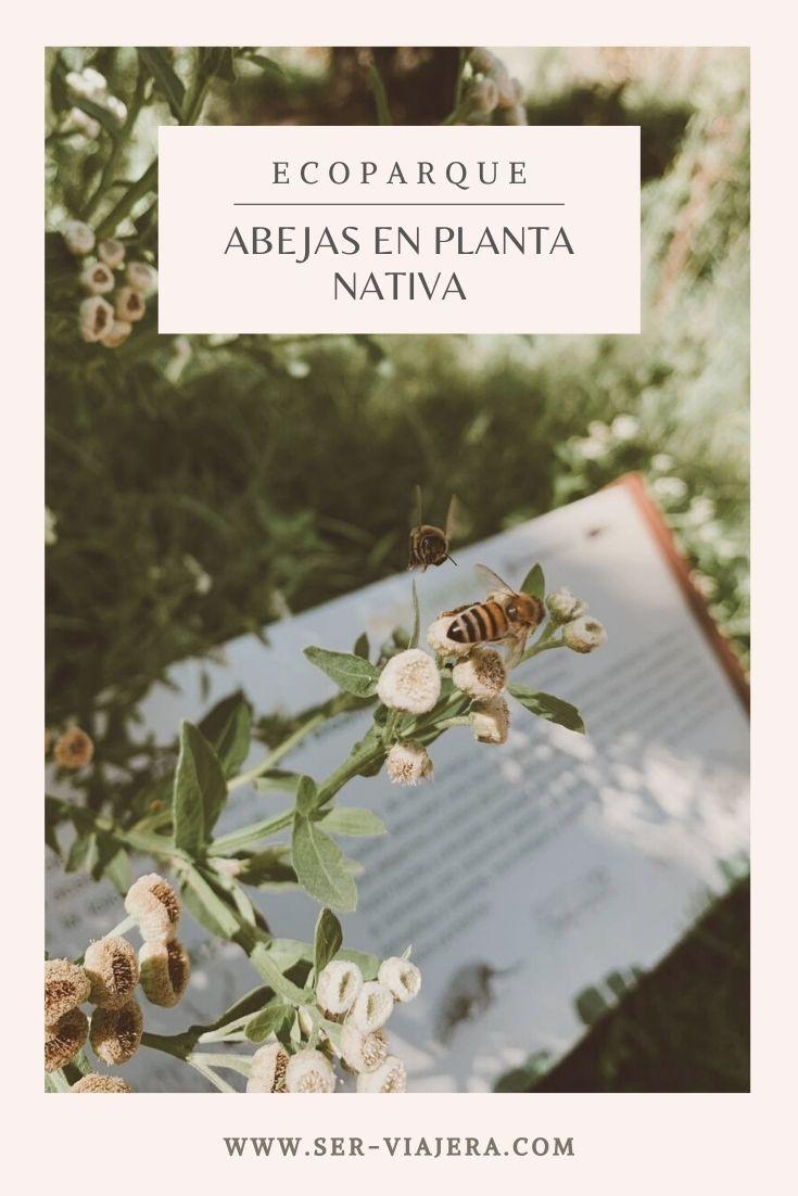 abejas en planta nativa ecoparque buenos aires